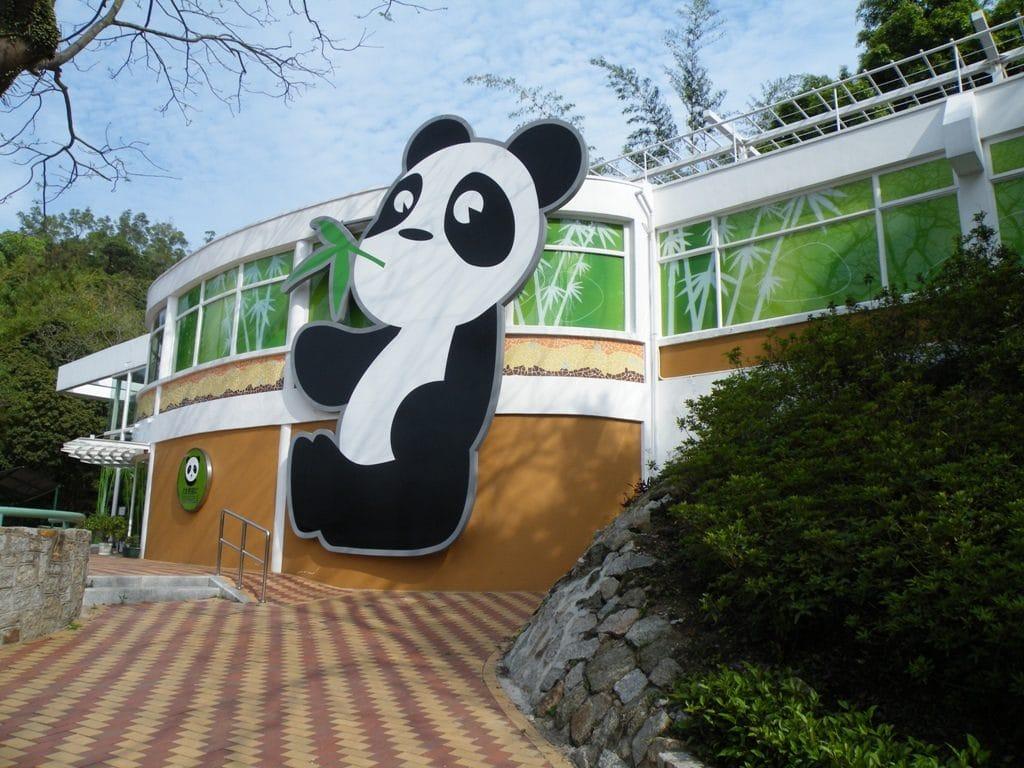 Rendre visite aux pandas géants.