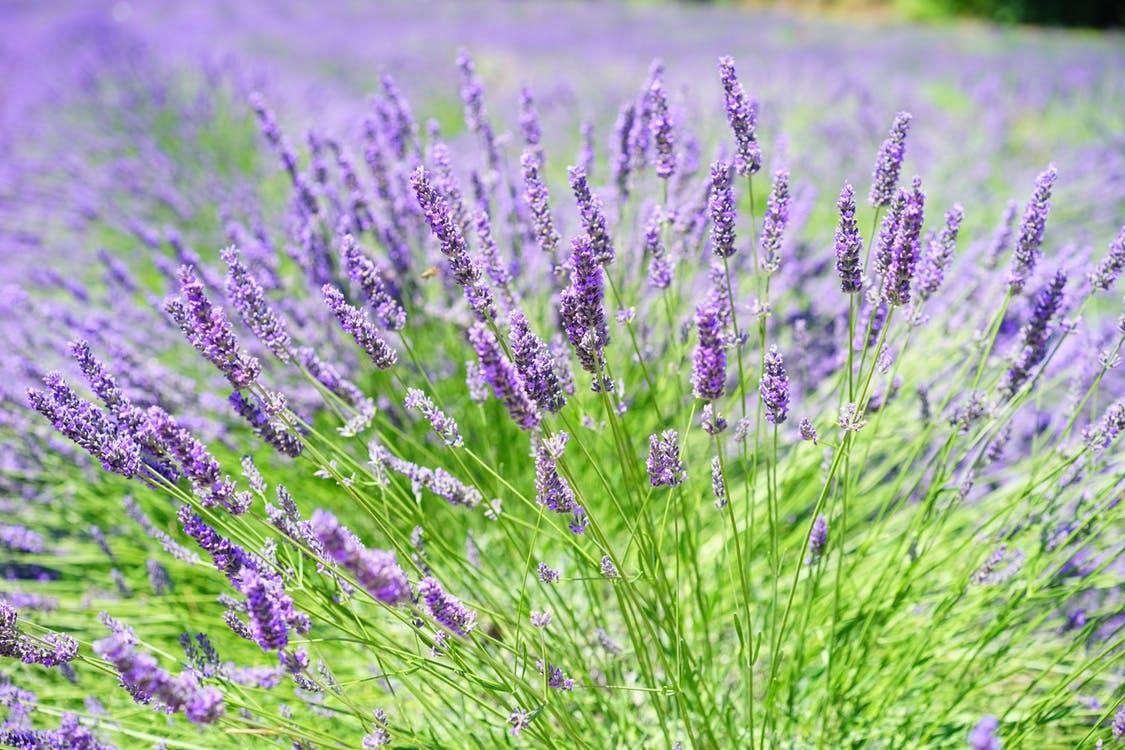 pourquoi vivre en Provence